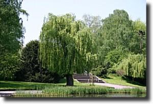 westfriedhof_teich