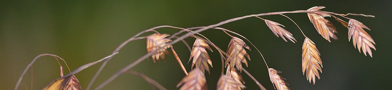 Bestattungen Flack Kopf-Grafik GRAS